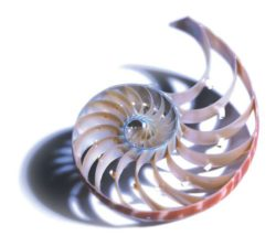 Modelled on nature: the logarithmic spiral is a new concept in gear unit design alongside involute and cycloidal. © 2018 WITTENSTEIN SE